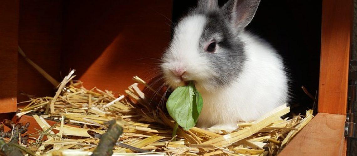 rabbit-2940275_640.jpg